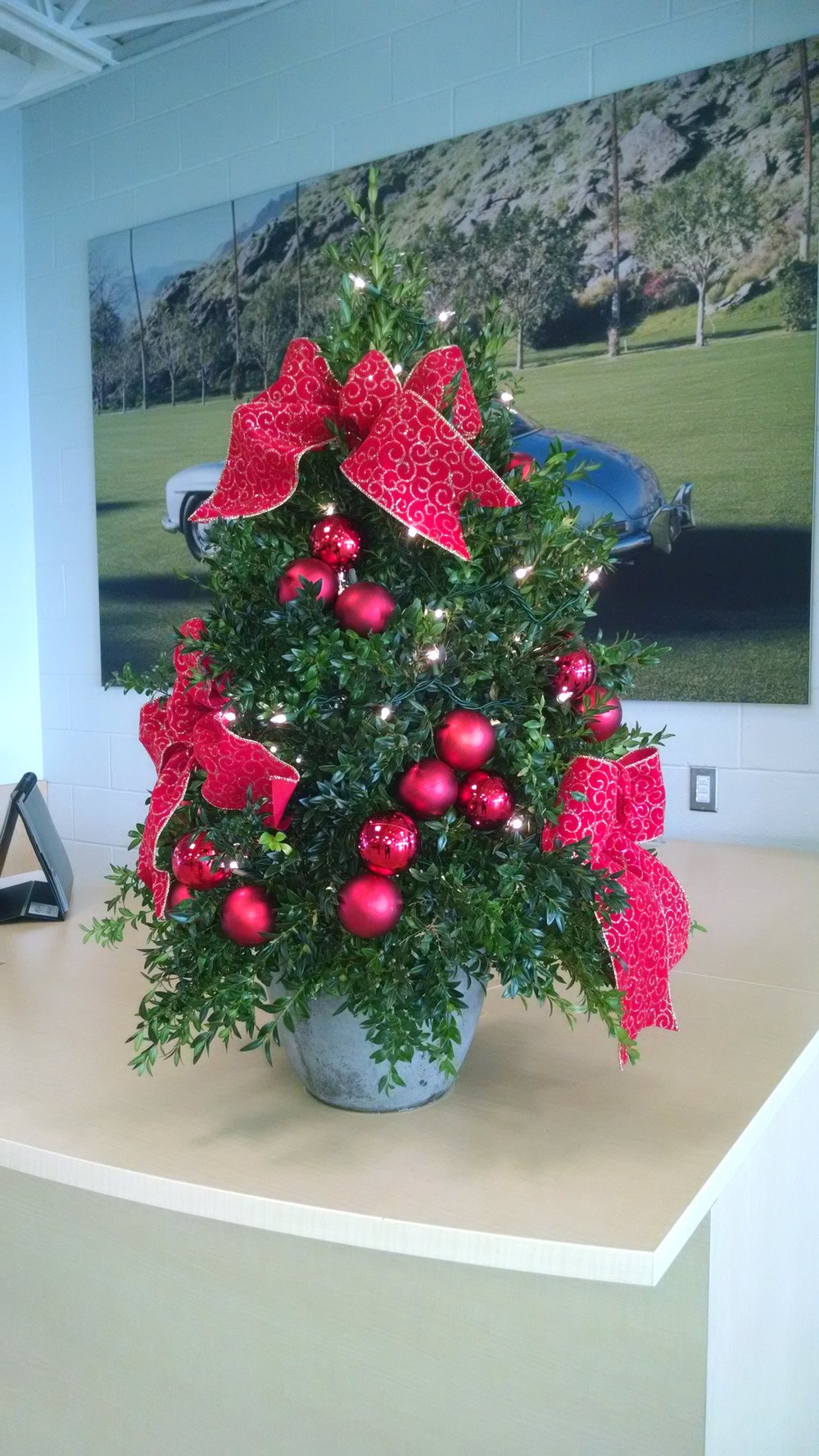 B- Boxwood tree with red accents.jpg