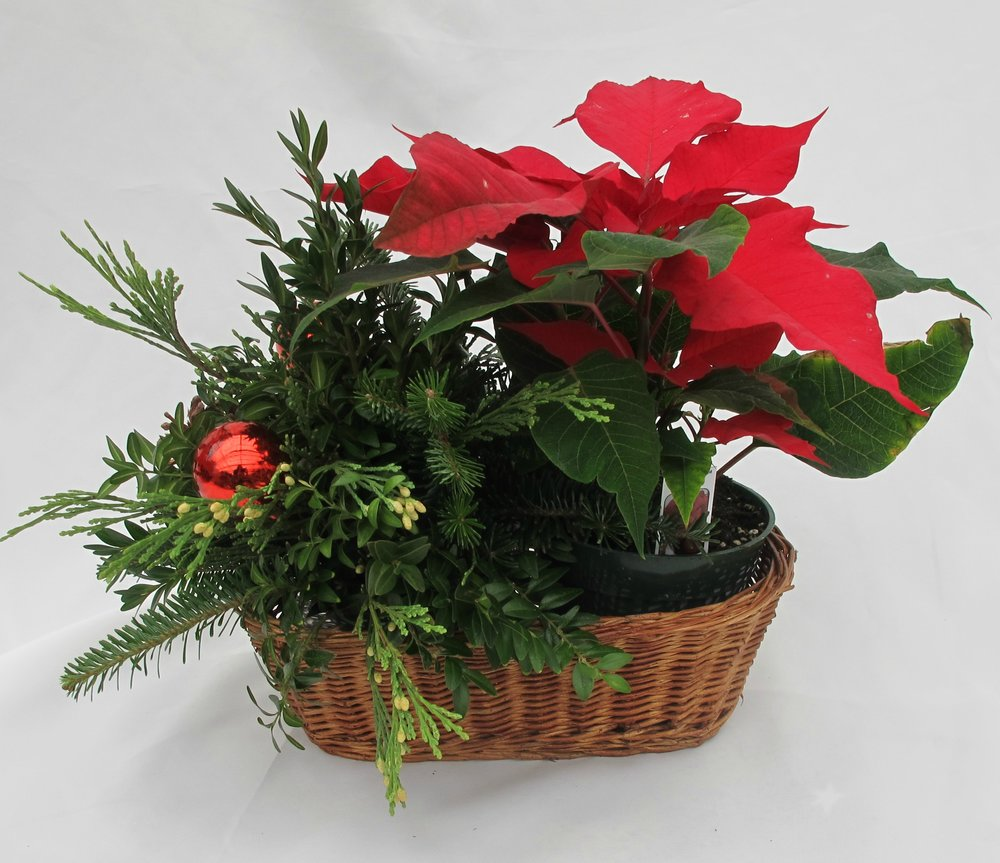 B- Poinsettia and mixed greens.jpg