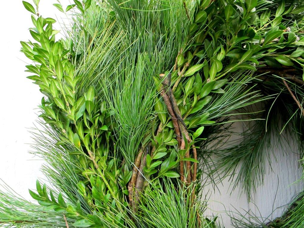 R- White pine and Boxwood.jpg