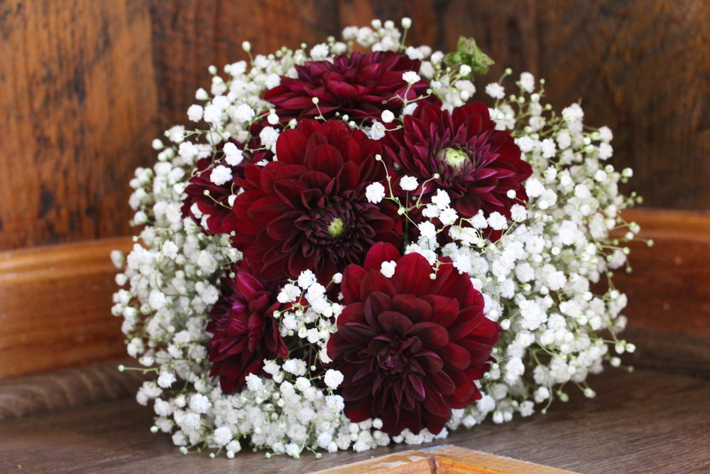 B- Burgundy dahlia and white bb.JPG