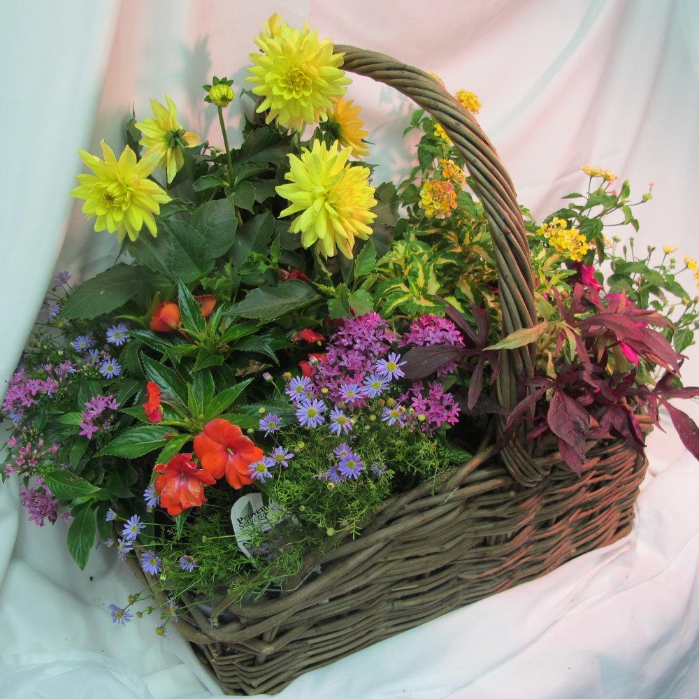 B- Blooming Garden flwoers.JPG