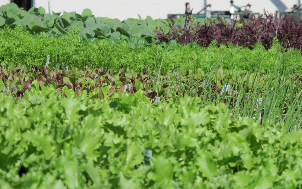 Cold crop vegetables.jpg