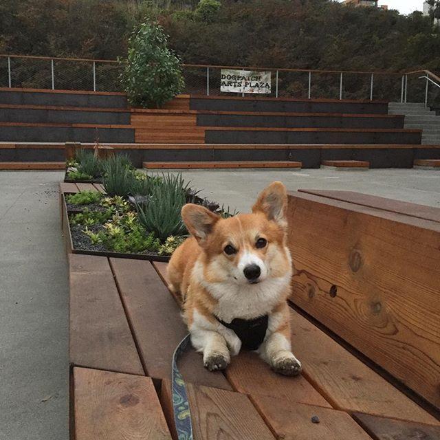 Loving our new #dogpatchartsplaza! #dogpatch #communityspace