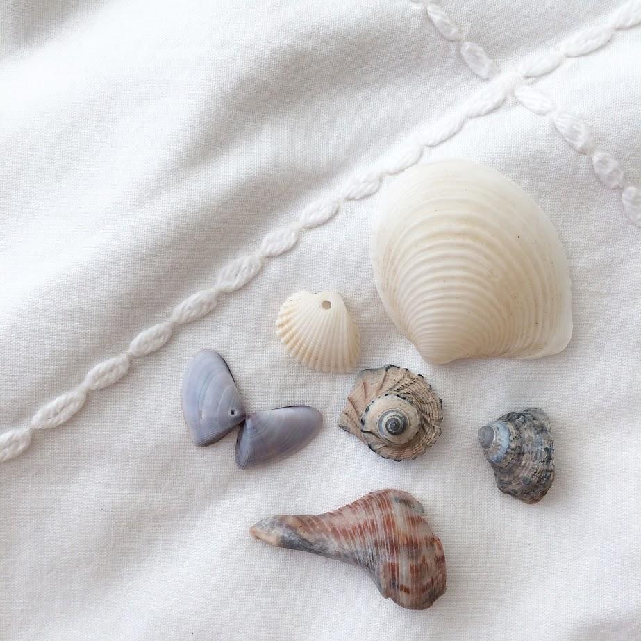seashells 2.jpg