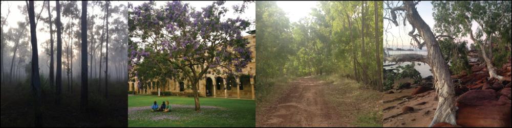 Foggy morning on Groote | Anindilyakwa Ladies visiting UQ | Alyangula dirt track | Marble Point Stringy Barks