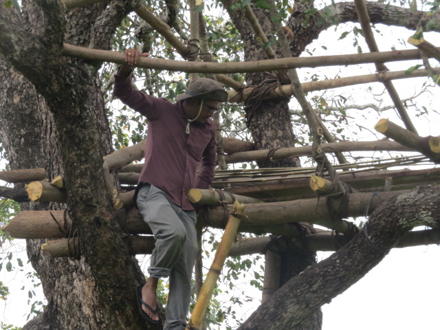 Ashoka constructing a tree hut in a village paddy land to conduct night observation on crop raiding elephants
