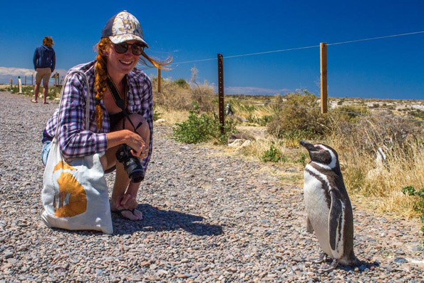 Walking with the penguins in Argentina