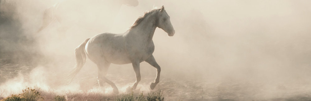Schmaltz Law Horse Running Through the Mist Photo