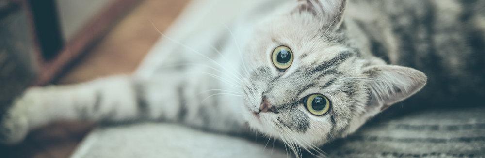 Schmaltz Law Inquisitive Cat Photo