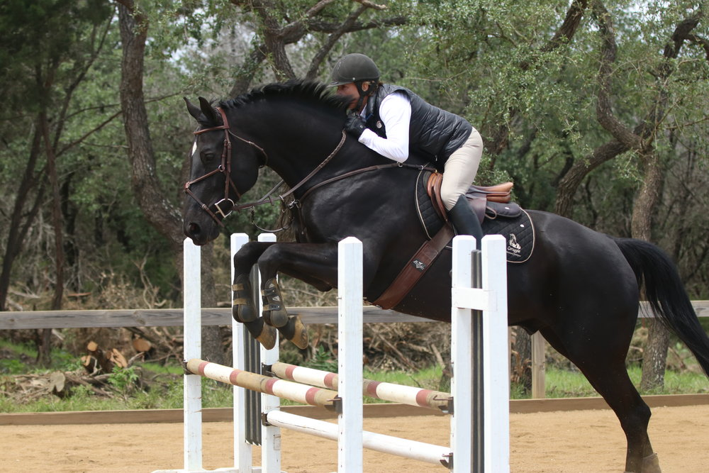 hunter jumper horse for sale austin