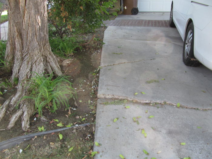 Tree-root-cracking-conc.-664-700x525.jpg