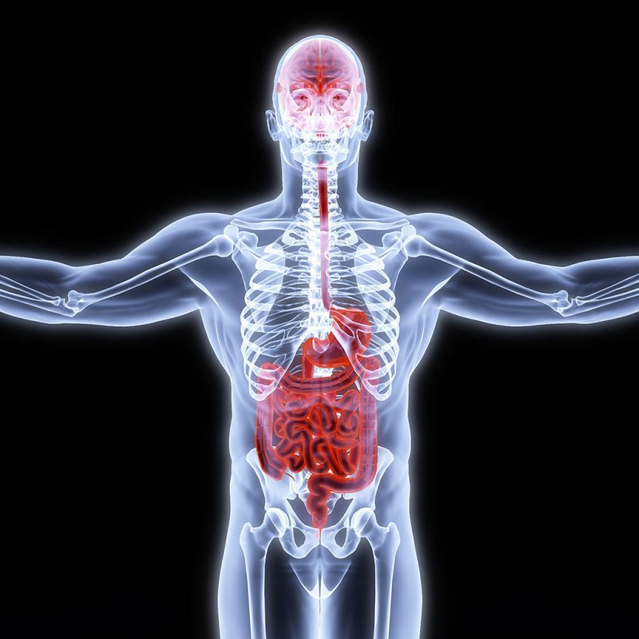 Stens Corporation Neuroanatomy Neurophysiology Or Physiological