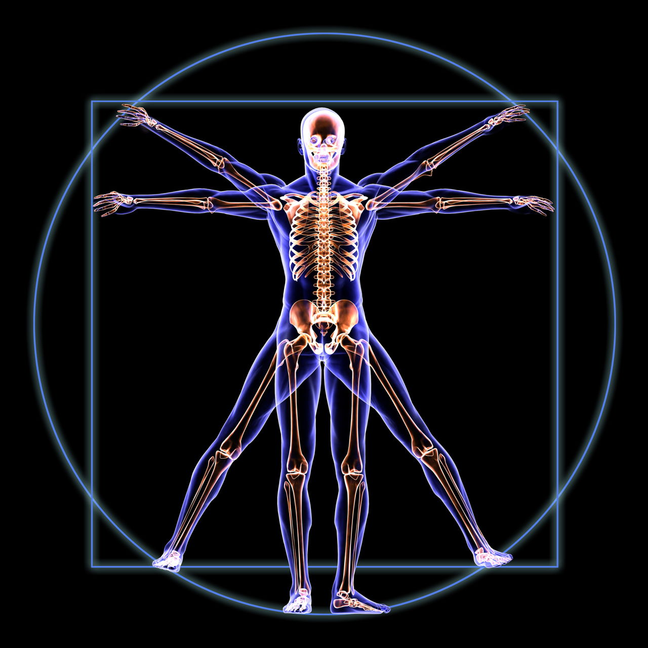Stens Corporation Anatomy And Physiologyhuman Biology Online Course
