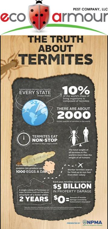 Termite Facts, DE