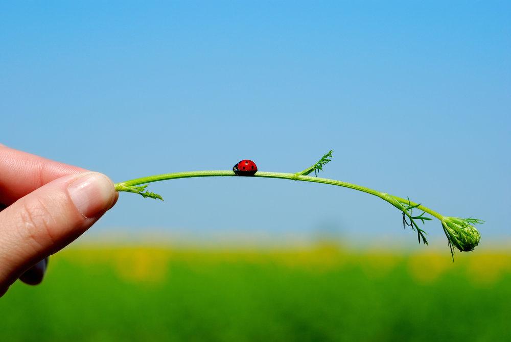 Green & Eco-Friendly Pest Control, DE