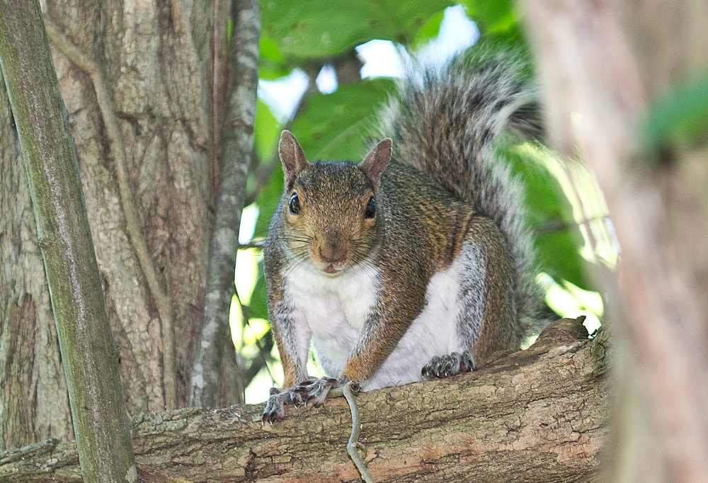 EcoArmour Pest Company - is proud to be an expert Wildlife Control Service provider to Delaware's three counties New Castle, Kent and Sussex. Animals may seem cute from afar, but their destructive chewing and nesting will cause damage to your home or business.