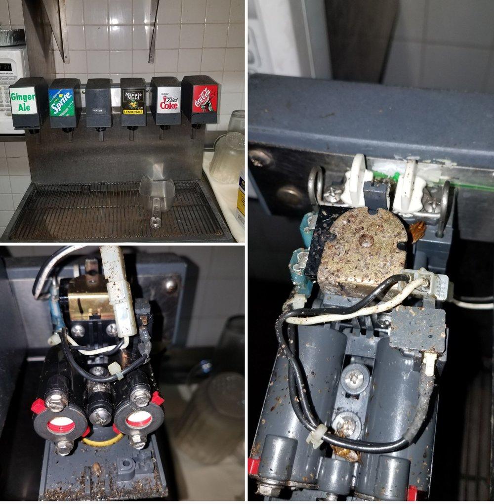 cockroach nesting soft drink dispenser