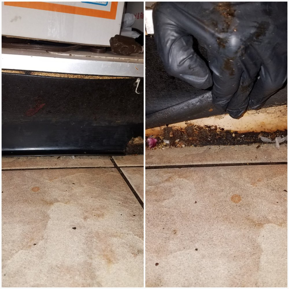 cockroaches nesting behind baseboard