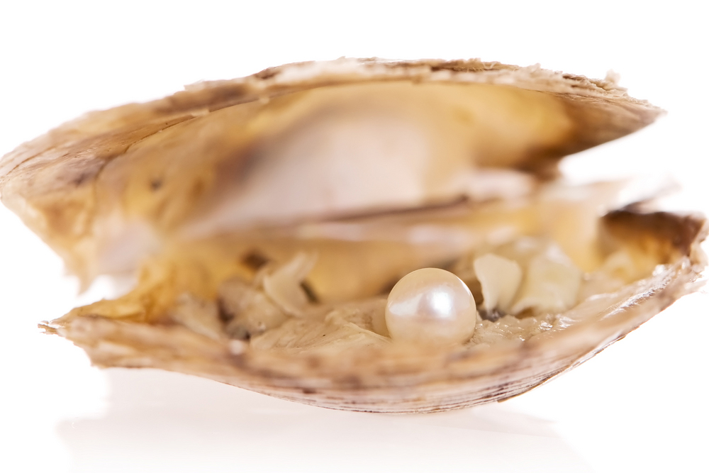 Cultured Pearl Oysters - Only want to open an oyster?Choose different oyster opening packages