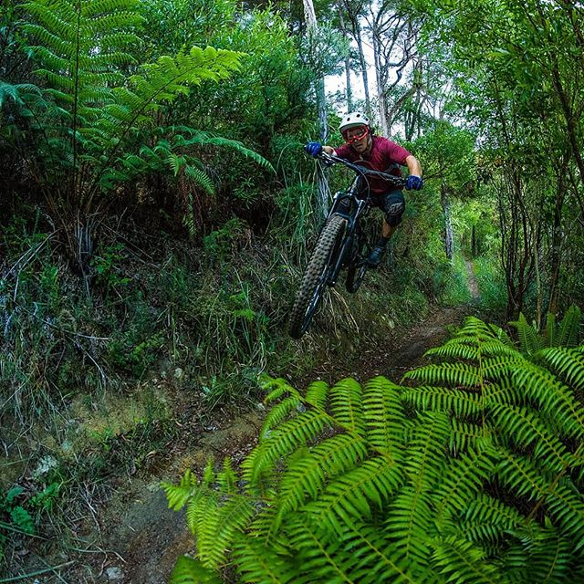 @louiharvey_mtb gapping through the punga on 629 over the Xmas holidays. #whfwyl #braapp #629 #nelsonnz #nelsonmtbc #gravitynelson #bikes #getoutside #ridebikes #optoutside #nz