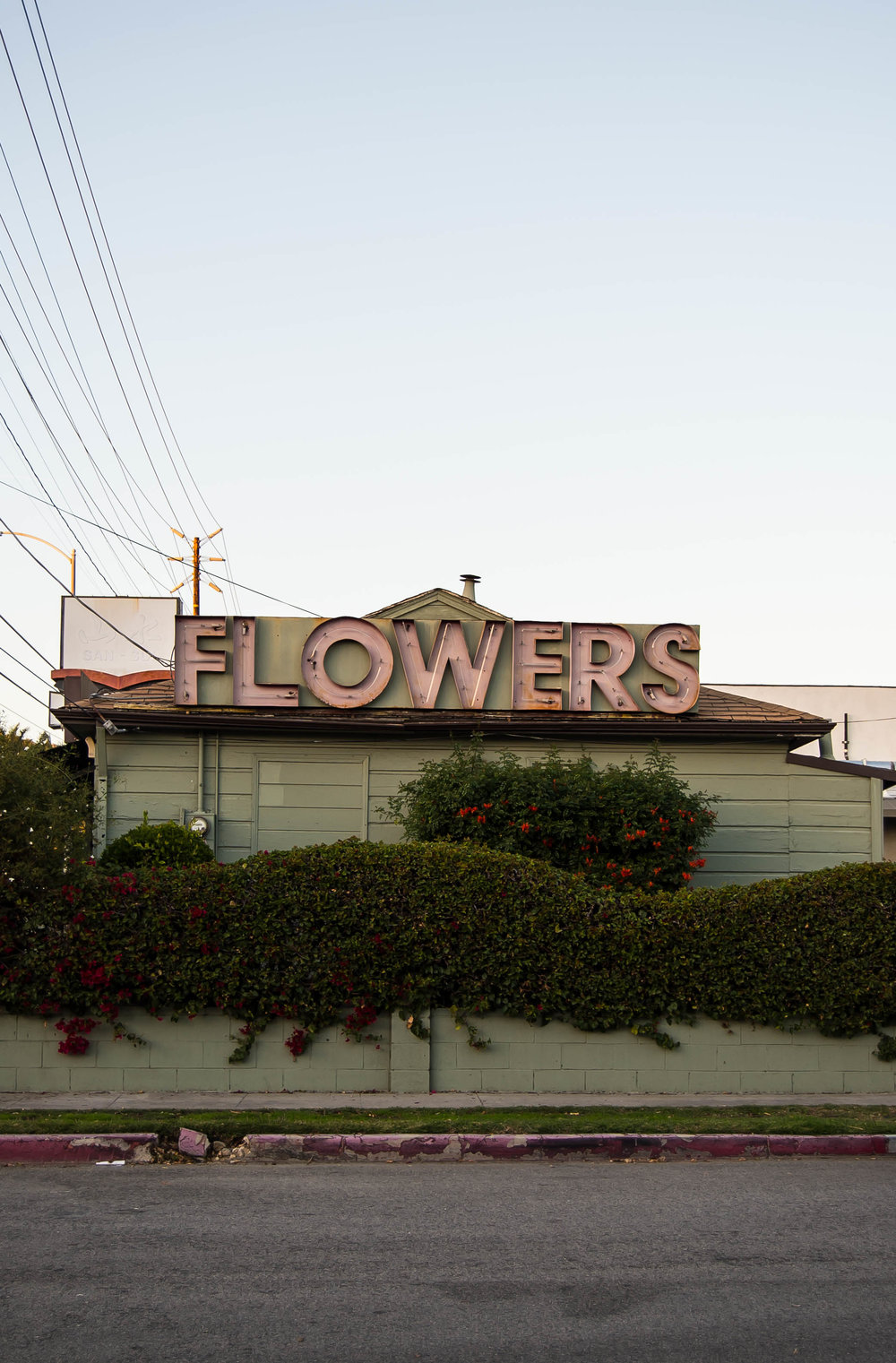 2016_12_27 la_ca_usa flowers house V2.jpg