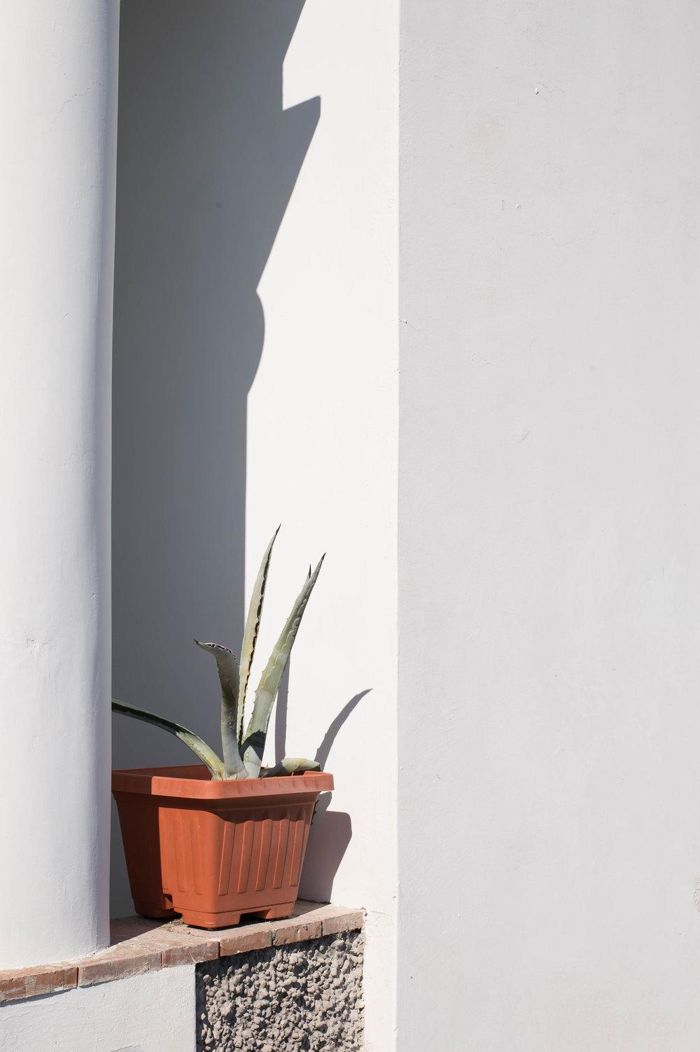 2015_09_22 capri_italia potted agave 1 V1.jpg