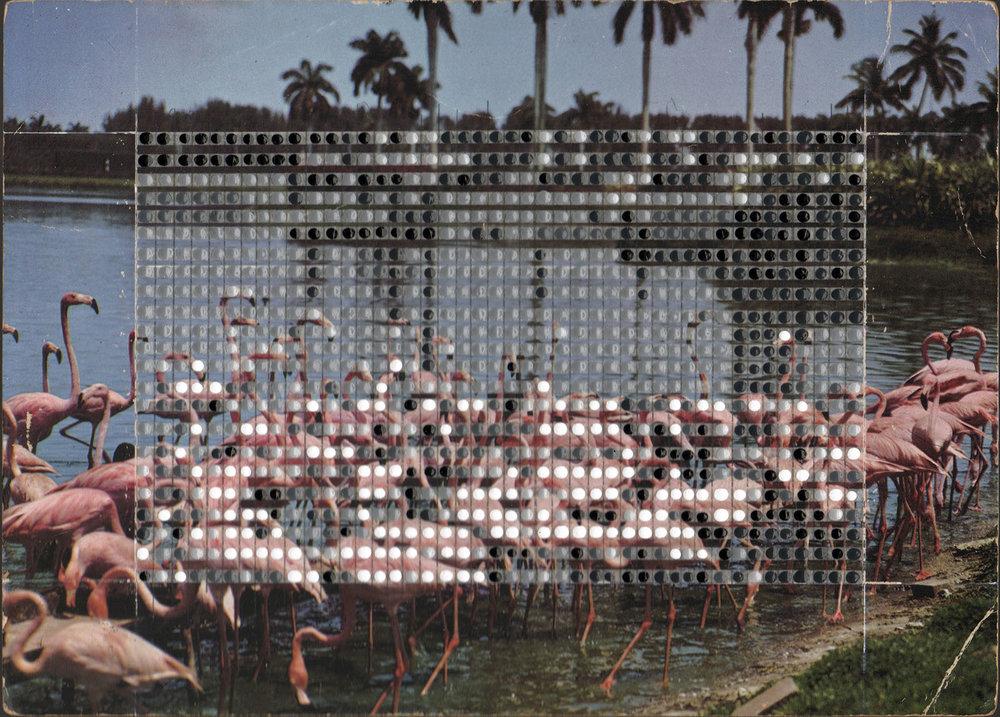 Borrowed Landscapes Study No. 151/FL, Florida Flamingos