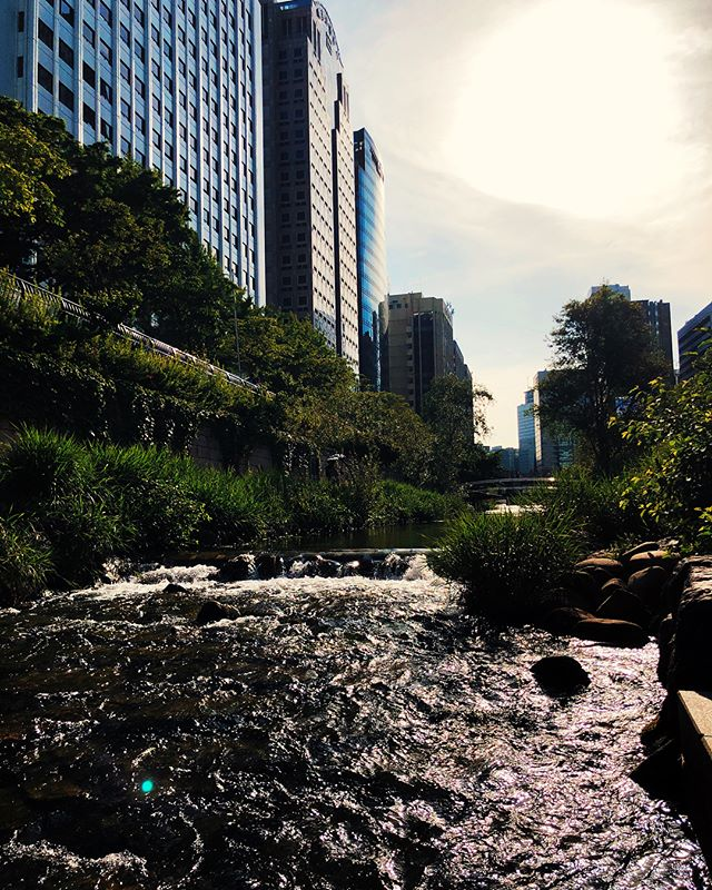 Urban Stream Running right through the downtown of Seoul is an 11km stream, one of the longest in the world. Just a few stairsteps down from the Cheonggyecheon street magically teleport walkers from the hustle and bustle of the hi-tech metropolis to a serene recreation area. People come here to unwind after a day of hard work, focus before an important meeting or just sit and chat near the water. The stream has been part of Seoul since its early history and dates as far as 12th century, however during the economic boom it got covered with a concrete pavement.  Recently however the highway was removed to restore the stream and build a public area around it. Since then, it has been one of the brightest examples of sustainable urban design, demonstrating how modern mega-cities can mix sleek infrastructure with lush greenery and water reserves. . . . #seoul #korea #southkorea #myeongdong #cheonggyecheon #city #cities #urbanplanning #urban #design #metropolis #megapolis #insfrastructure #nature #stream #history #greenery #water #recreation #recovery #vsco #discovery #2footsteps