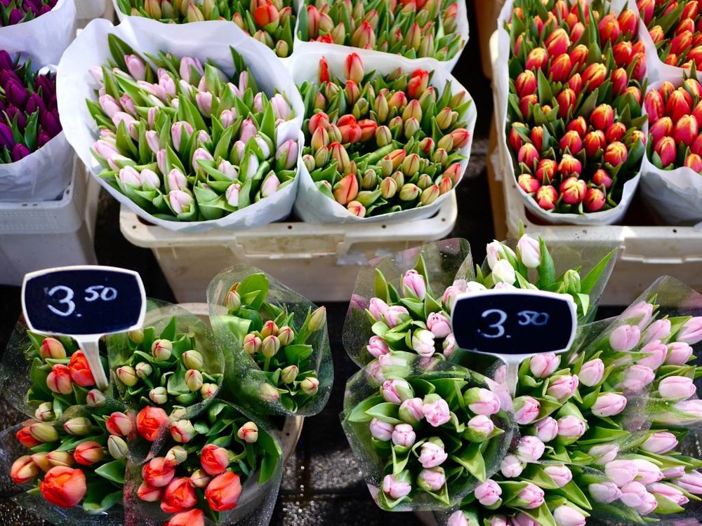 floating-flower-market-tulips-amsterdam.jpg