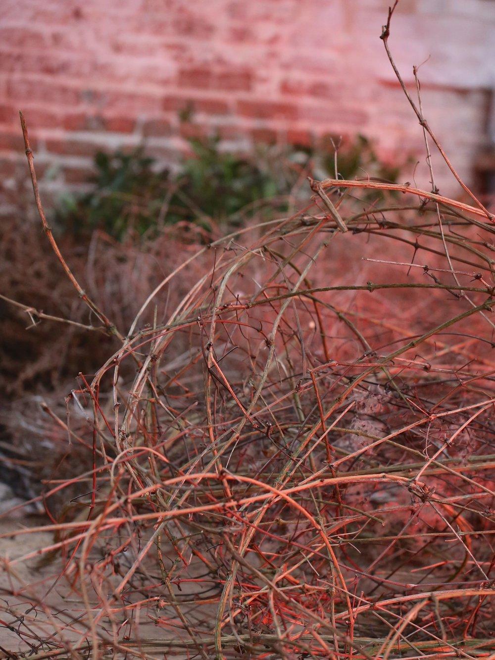 Foraged vines  Image by Julie King