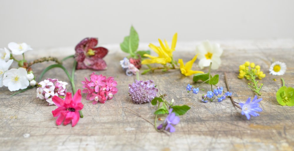 March garden snippets