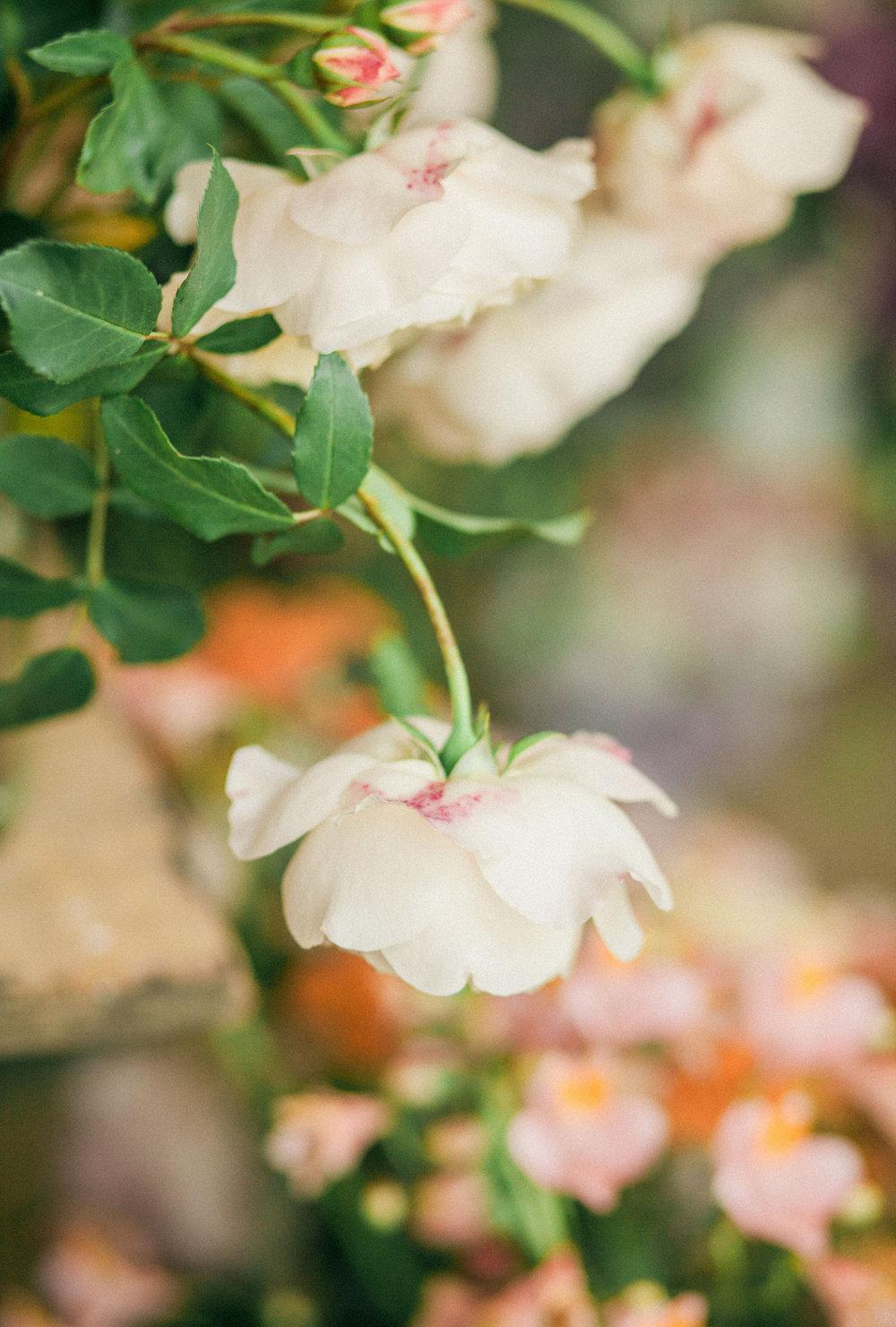 Image - Gina Dover Jaques | Florals - Moss & Stoen Floral Design