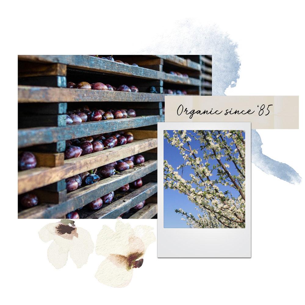 Organic_Collage.jpg