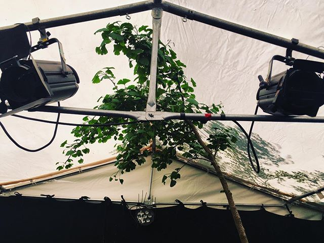 Ginko tree inside our venue @wandsworthartsfringe @fragilityldn #ginkotree #wandsworthfringe #fragilitytakeover #theatre #london
