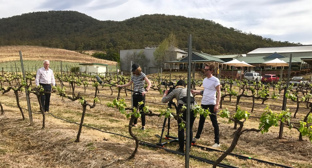Mount Pleasant vineyard with coach Bill Carroll