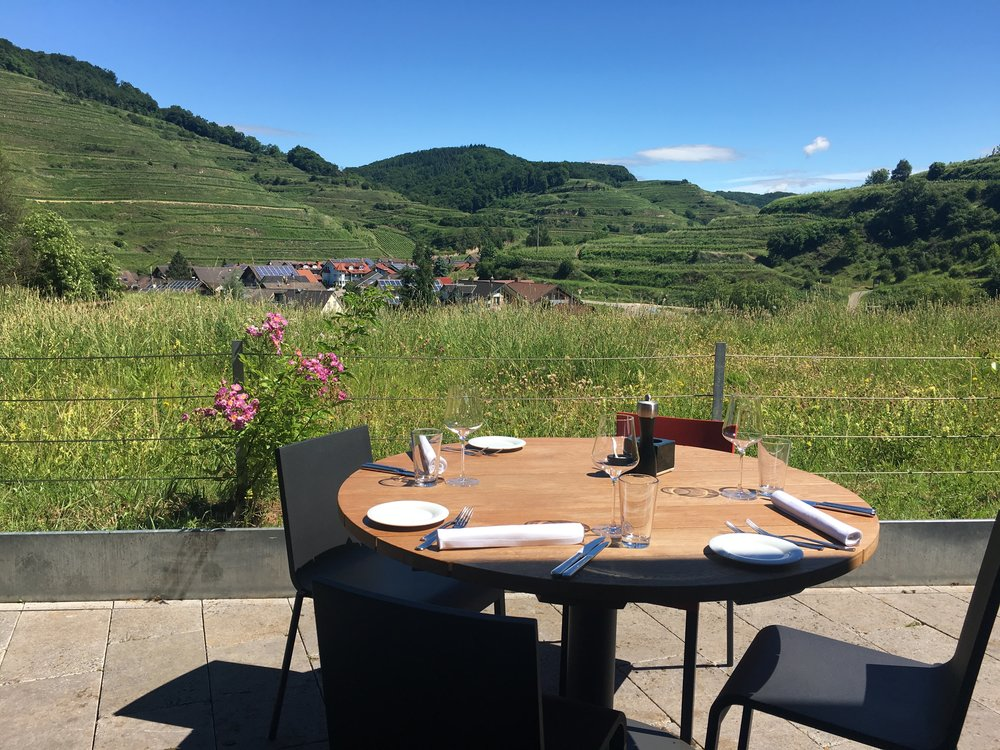 View from the KellerWirtschaft restaurant in the super modern winery of Franz Keller