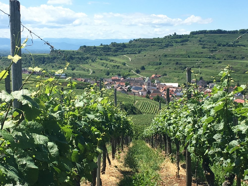Welcome to wine country (here: Kaiserstuhl in Baden)