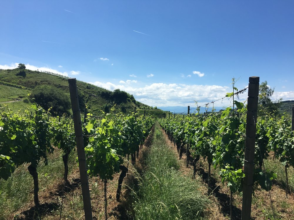 We took a hike through the never-ending vineyards
