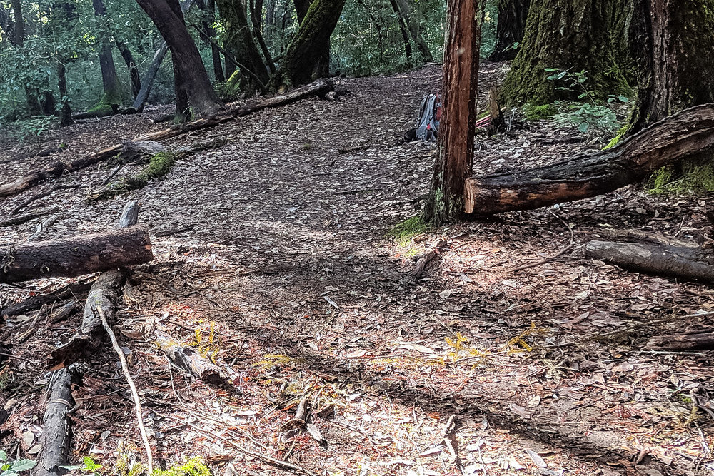 madrone cleared.JPG