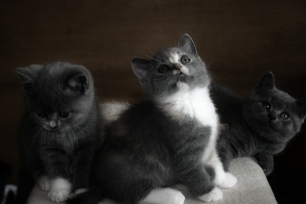kittybabies.jpg