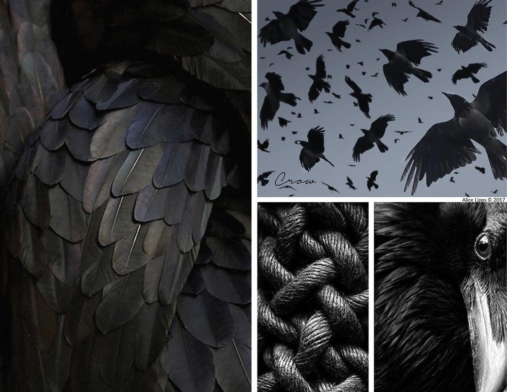 Bird_Crow_Inspiration_Board.jpg