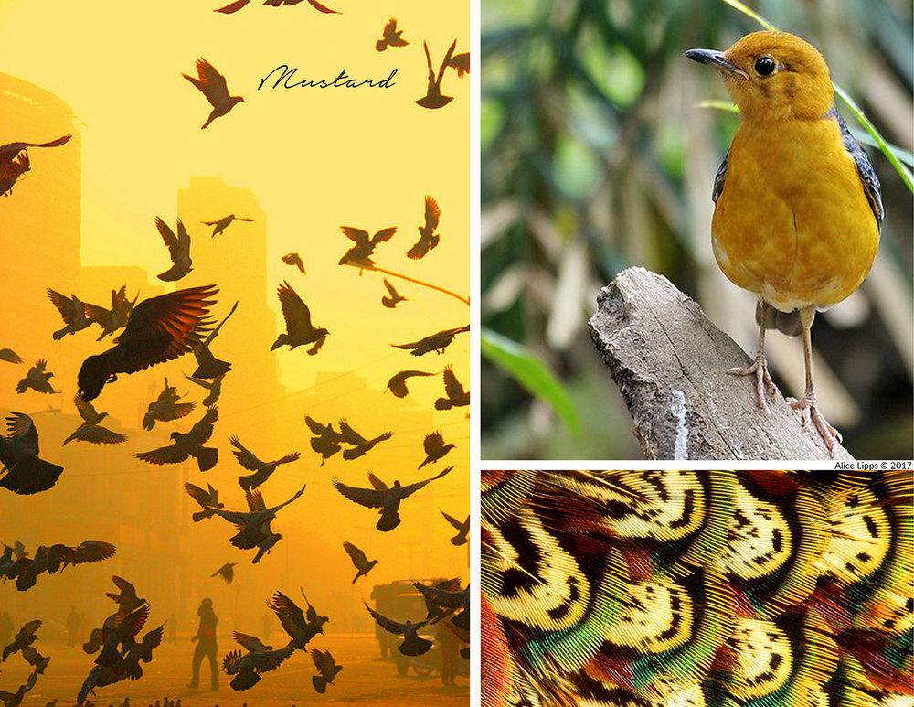 Bird_Mustard_Inspiration_Board.jpg