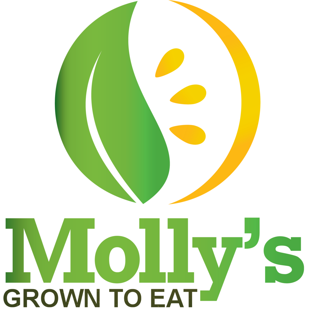 Molly_Logo_top (4).png