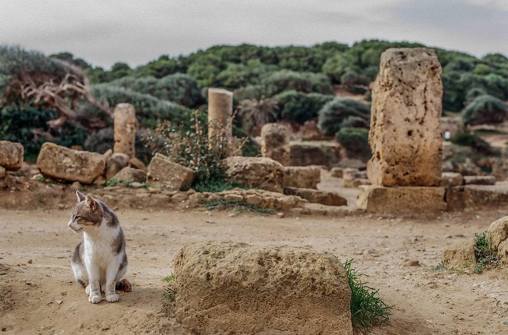 09B_algerie.jpg