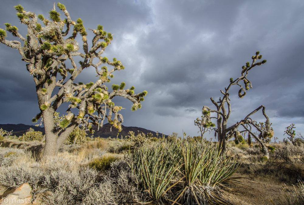 Mojave Wilderness