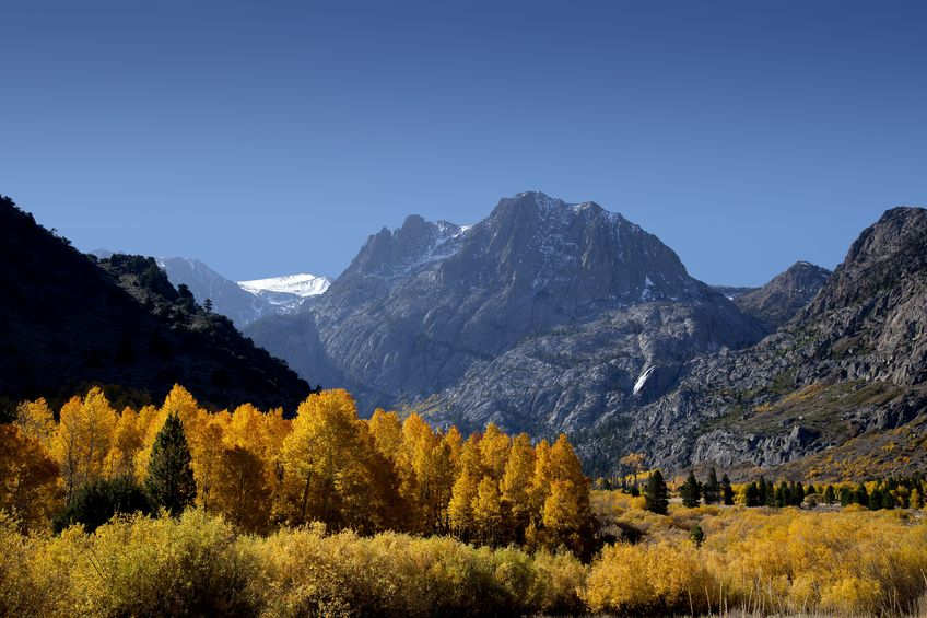 Aspen leaves change colors along the June Lake Loop with Carson Peak in the background