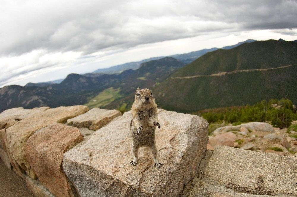 Chipmunk_Colorado.jpg
