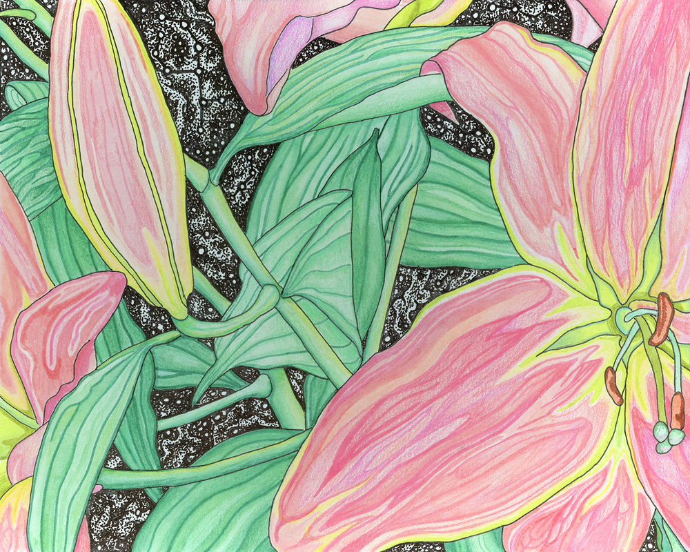 Night Lily 2/ Colored Pencil, Pen