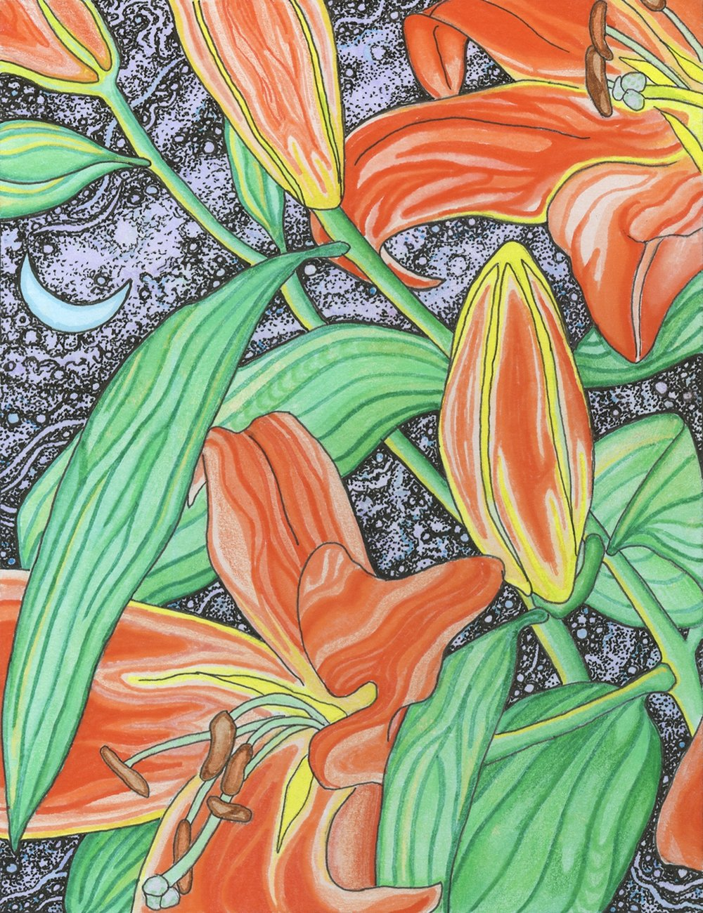 Night Lily 1/ Colored Pencil, Pen