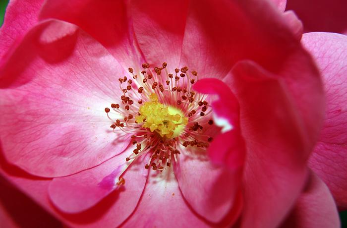 JH0184_Pink.jpg